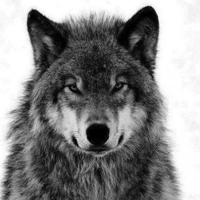 Zekewolf