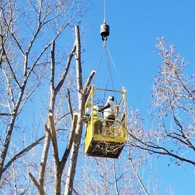 Treeclimber76