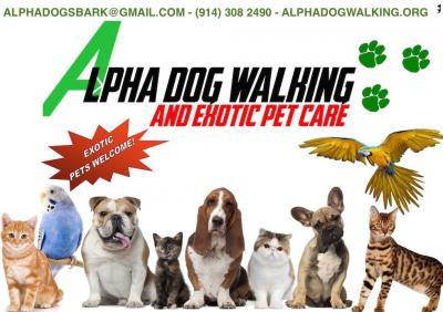 alpha dog walking exotic pet care yonkers ny